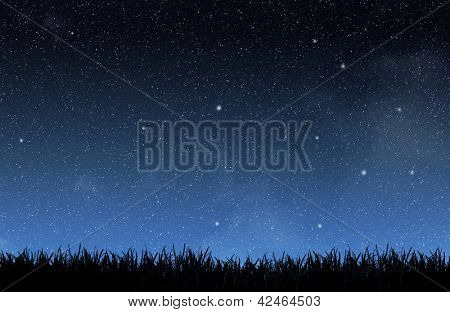Grass under the night sky