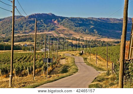 Mountain Vineyard Region Scenic Road