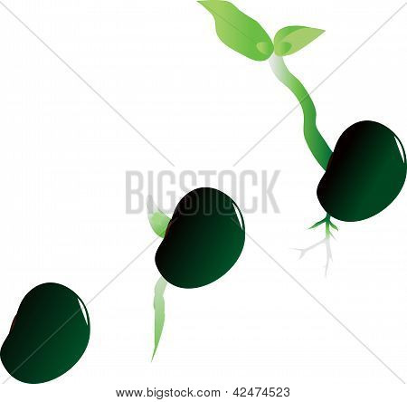 Illustration Of Stages Of Growth Of Plant
