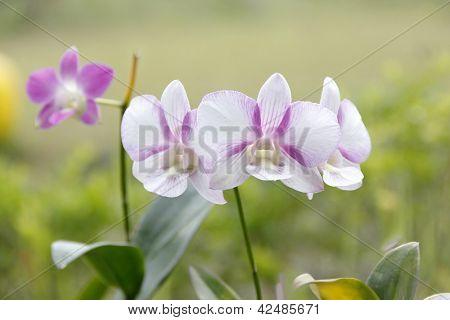 An Orchids