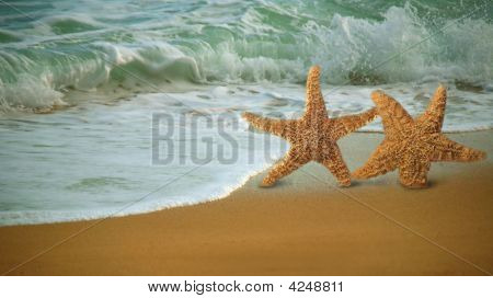 Adorable Star Fish Walking Along The Beach
