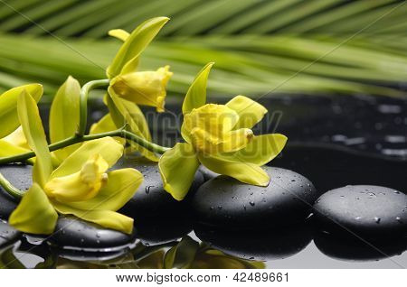 still life with plam ,pebbles and branch yellow orchid