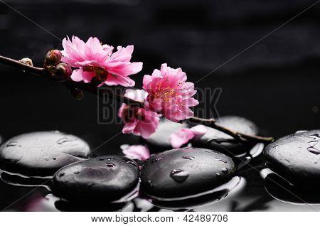 Zen pebbles. Stone spa
