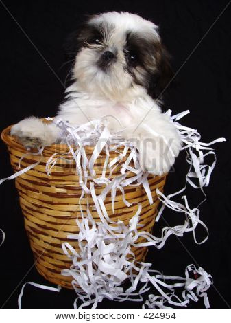 Puppy In Waste Basket