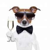 stock photo of dog birthday  - cheers dog with a glass of champagne - JPG