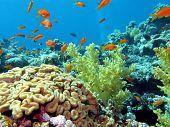 Постер, плакат: Коралловый риф с мозга и мягких кораллов в нижней части тропических морских