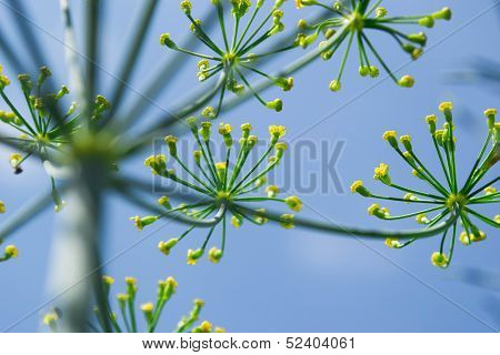 Bright Yellow Flowers on Blue Sky