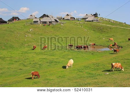 Alpine Meadow Pasture, Slovenia