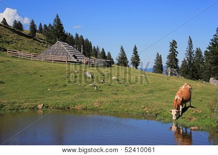 Wooden Hut And Drinking Cow, Slovenia