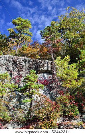 Pine trees flourish on rocks