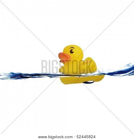 rubber duck in water
