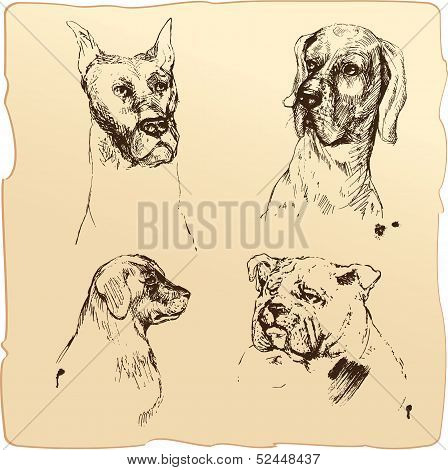Set Of Dogs Heads - Dalmatian, Bloodhound, Bulldog Hand Drawn Illustration - Sketch In Vintage Style