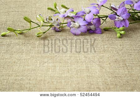 Delphinium On Canvas Background