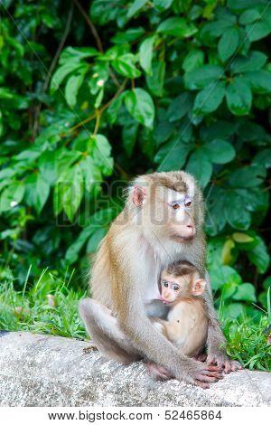 kleine Affen und seine Mutter