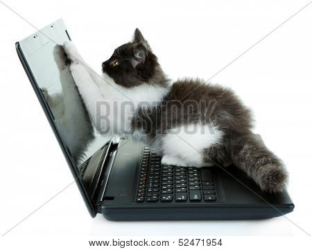 Little cute kitten and laptop, isolated on white