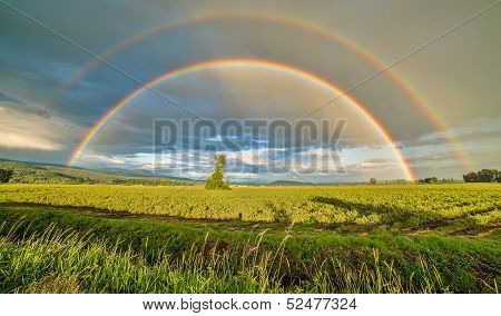 Double Rainbow Over A Tree