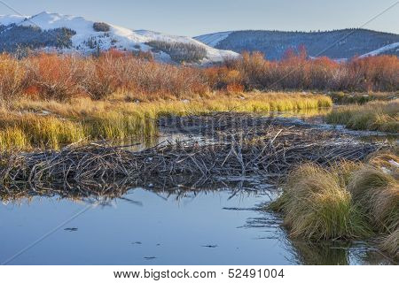beaver dam on North Platte River  above North Gate Canyon near Cowdrey, Colorado, in a fall scenery