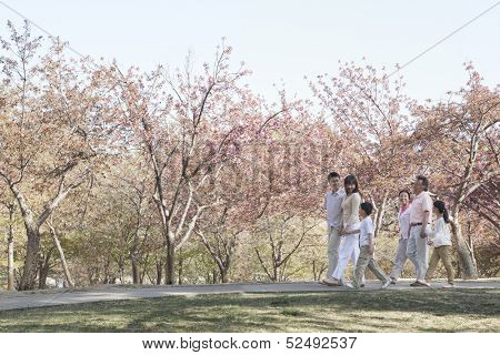 Multi-generational family taking a walk amongst the cherry trees