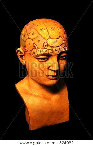 Psychologie-Modell