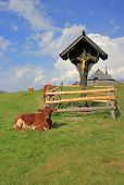 stock photo of velika  - Wooden cross and cow - JPG
