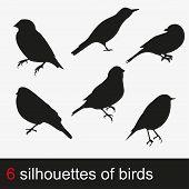 image of flock seagulls  - Vector illustration silhouettes of birds - JPG