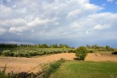 stock photo of velika  - Classical rural landscape with olive trees garden and farmhouse in Messenia near Velika Peloponnese - JPG