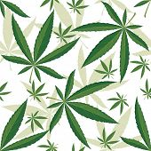 stock photo of cannabis  - Cannabis seamless ornament over white background - JPG