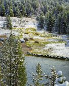 picture of lamar  - Bison Herd on Yellowstone River after a late September snowfall - JPG