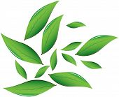 picture of darjeeling  - Tea leaves Vector illustration - JPG