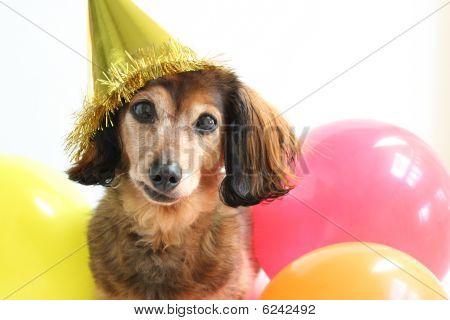 Cachorro de aniversário.