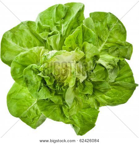 Bunch of Fresh Green Salad Close up Top View Surface Isolated On White Background