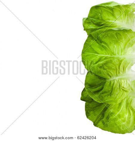 Border of Lettuce Salad Close up Top View Surface Isolated On White Background