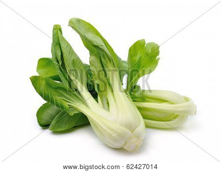 Bok Choy (chinese Cabbage) Isolated On White Background