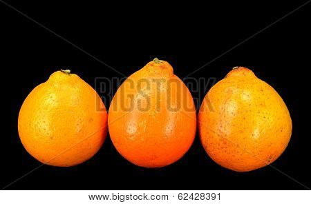 Honey Bell Oranges
