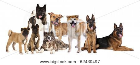 group of dogs,  set