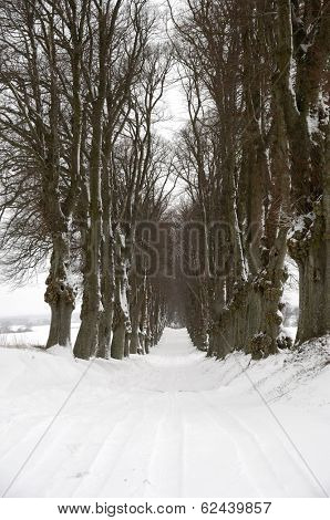 Pathway with trees on boath sides. Taken at winter time.