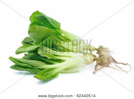 Pok Choi  Vegetable Isolated On White Background