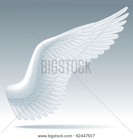 Vector isolated white wing of a bird with detailed feathers