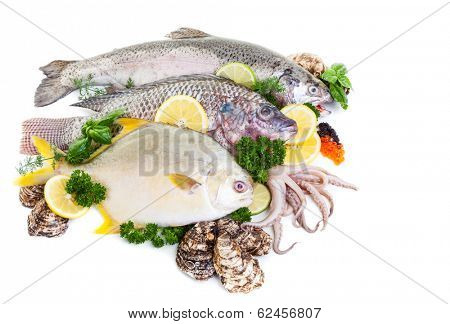 Fresh raw fish display with oysters and squid on a white background.