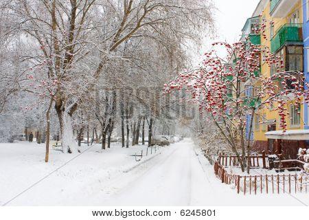 Novosibirsk. Academgorodok.