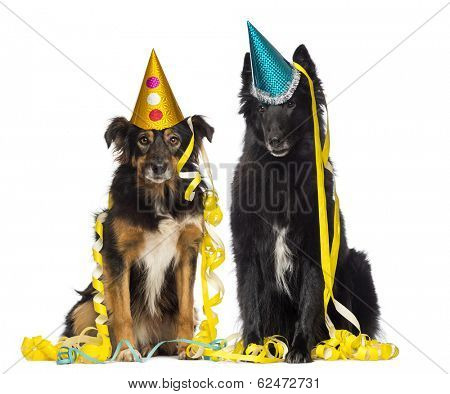 Two depressives dogs wearing party hat and sitting in serpentines