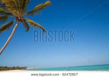Caribbean Sea And Palm
