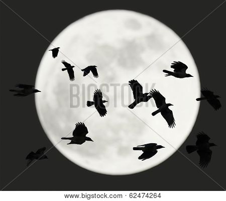Flying Crows With Full Moon