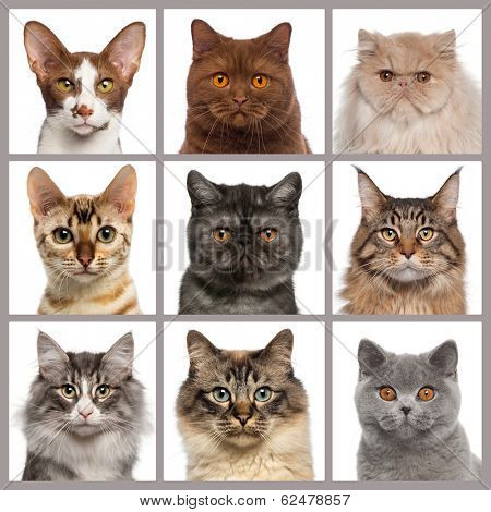 Nine cat heads looking at the camera