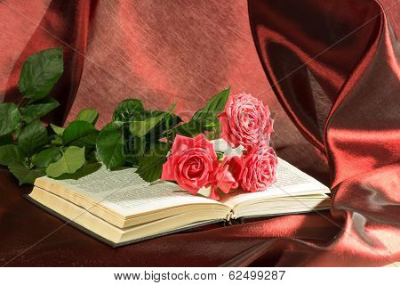 Pink Rose Lies On The Open Book