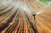 picture of sprinkler  - Sprinkler irrigated newly planted field with blue sky and clouds  - JPG