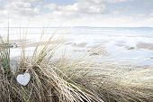 pic of dune grass  - single wooden love heart in dunes on an Irish beach in summer - JPG