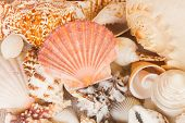 stock photo of scallop shell  - pile of  sea shells with scallop shell in center - JPG