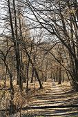 foto of buggy  - baby buggy and walking path in urban park in sunny spring day - JPG