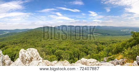 Deciduous Forests Panoramic View